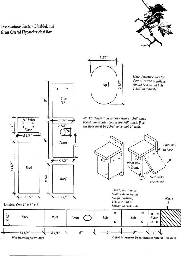 bird house plans swallow